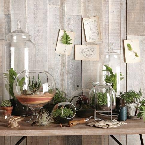 Hacer terrarios de plantas crasas con tarros de cristal 8