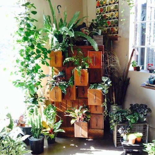 ¡Mi casa, mi selva! 20 ideas para decorar con plantas de interior 10