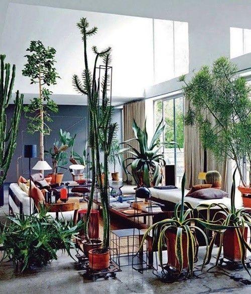 ¡Mi casa, mi selva! 20 ideas para decorar con plantas de interior 4