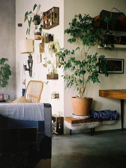 ¡Mi casa, mi selva! 20 ideas para decorar con plantas de interior 7