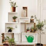 ¡Mi casa, mi selva! 20 ideas para decorar con plantas de interior 8