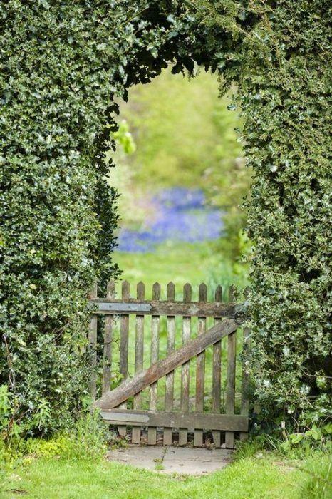 Herramientas de jardinería para podar fácilmente setos y trepadoras 6