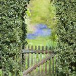 Herramientas de jardinería para podar fácilmente setos y trepadoras