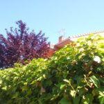 Herramientas de jardinería para podar fácilmente setos y trepadoras 9