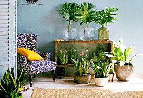 Los 25 rincones con plantas de interior más bellos de Pinterest 10