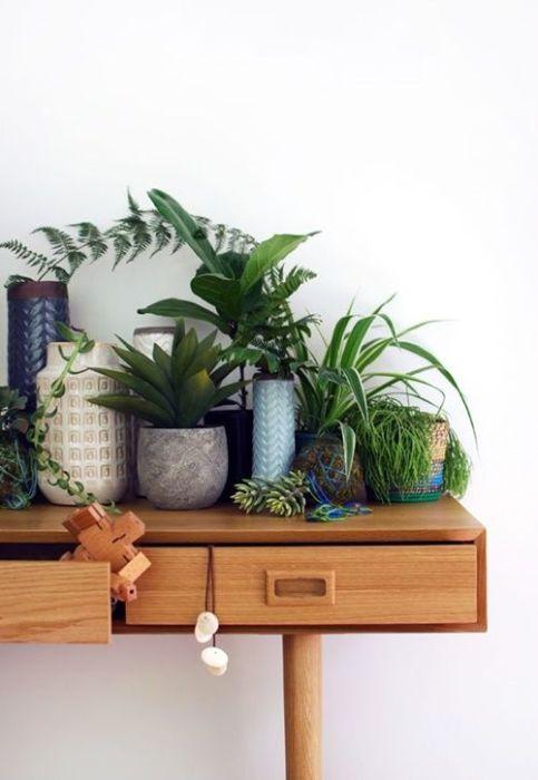 Los 25 rincones con plantas de interior más bellos de Pinterest 17