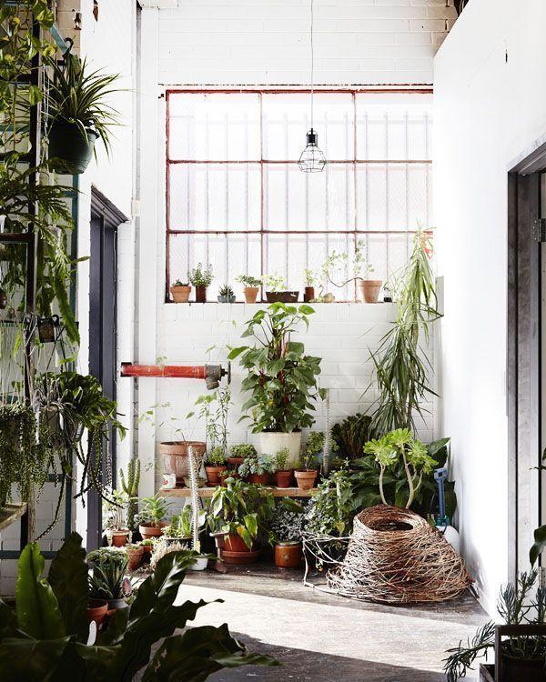 Los 25 rincones con plantas de interior más bellos de Pinterest 23