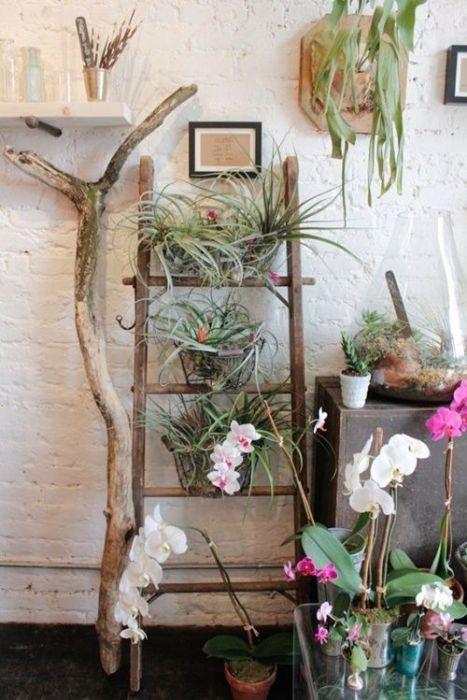 Los 25 rincones con plantas de interior más bellos de Pinterest 24