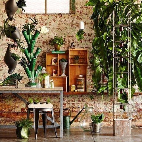 Los 25 rincones con plantas de interior más bellos de Pinterest 25