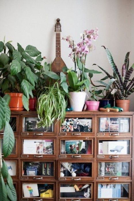 Los 25 rincones con plantas de interior m s bellos de for Estanteria plantas interior