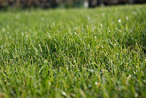 malas hierbas