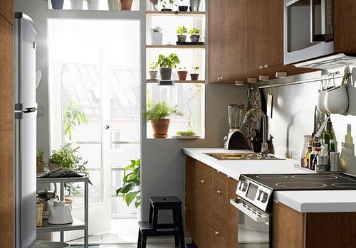 tips para decorar cocinas con plantas