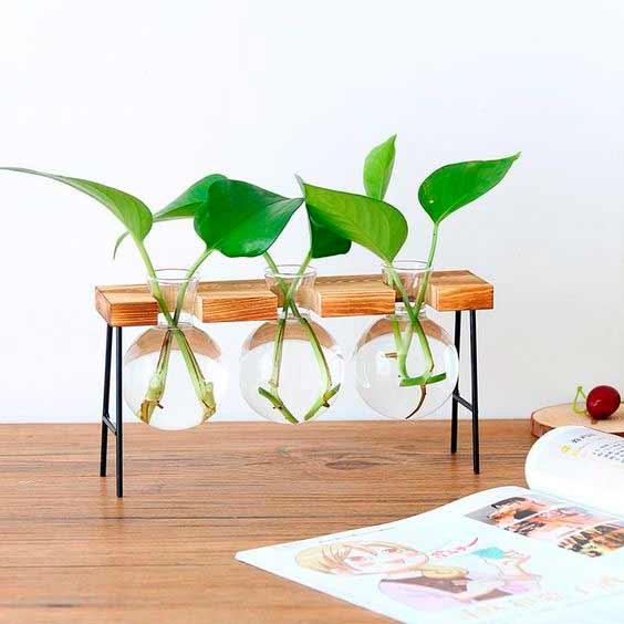 Tendencia en plantas: jardines acuáticos de interior