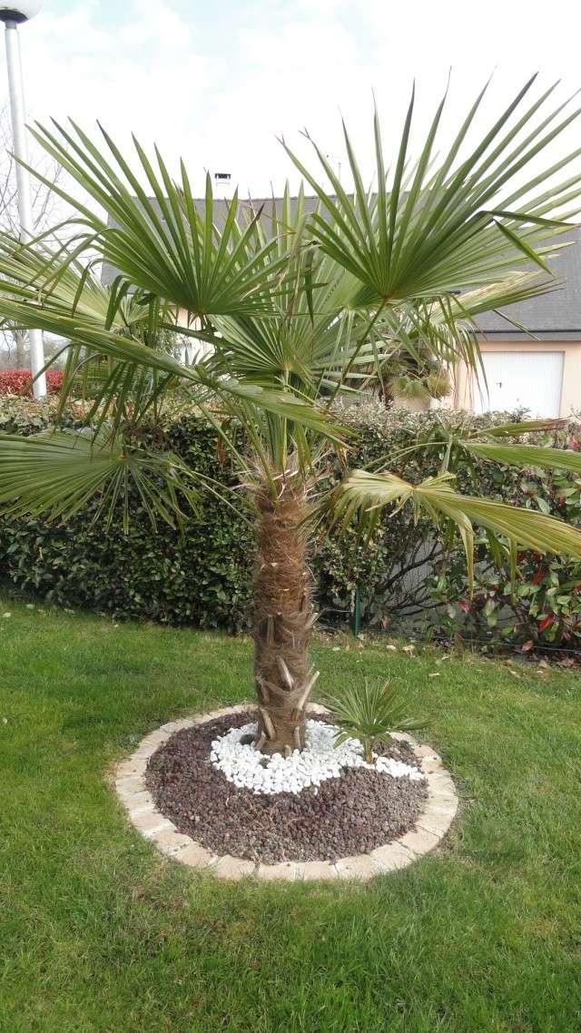 idee jardin avec palmier