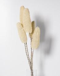 ofelia - flores secas