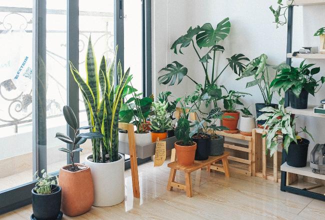 esquina llena de plantas en diferentes macetas y soportes