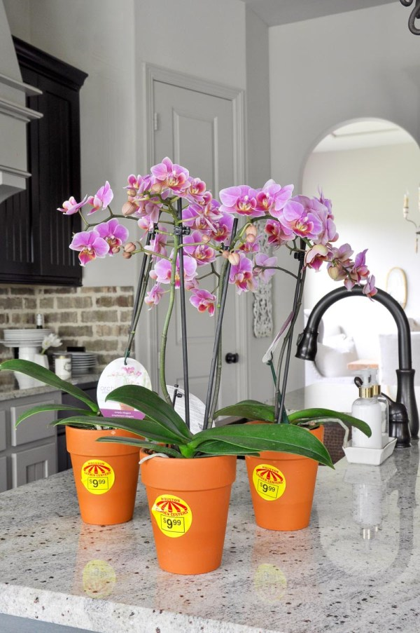 Make Simple And Beautiful Orchid Arrangement