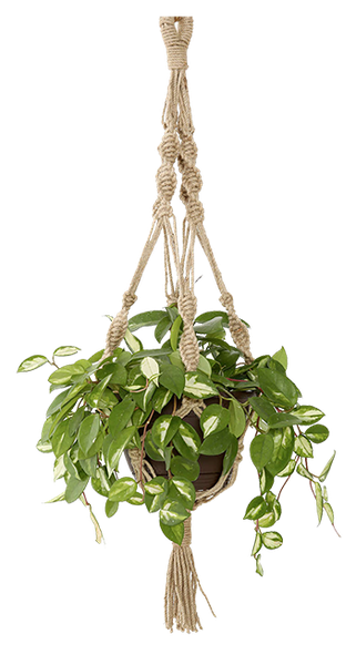 Magical Thinking Hand Knotted Hanging Plant Holder Decorist