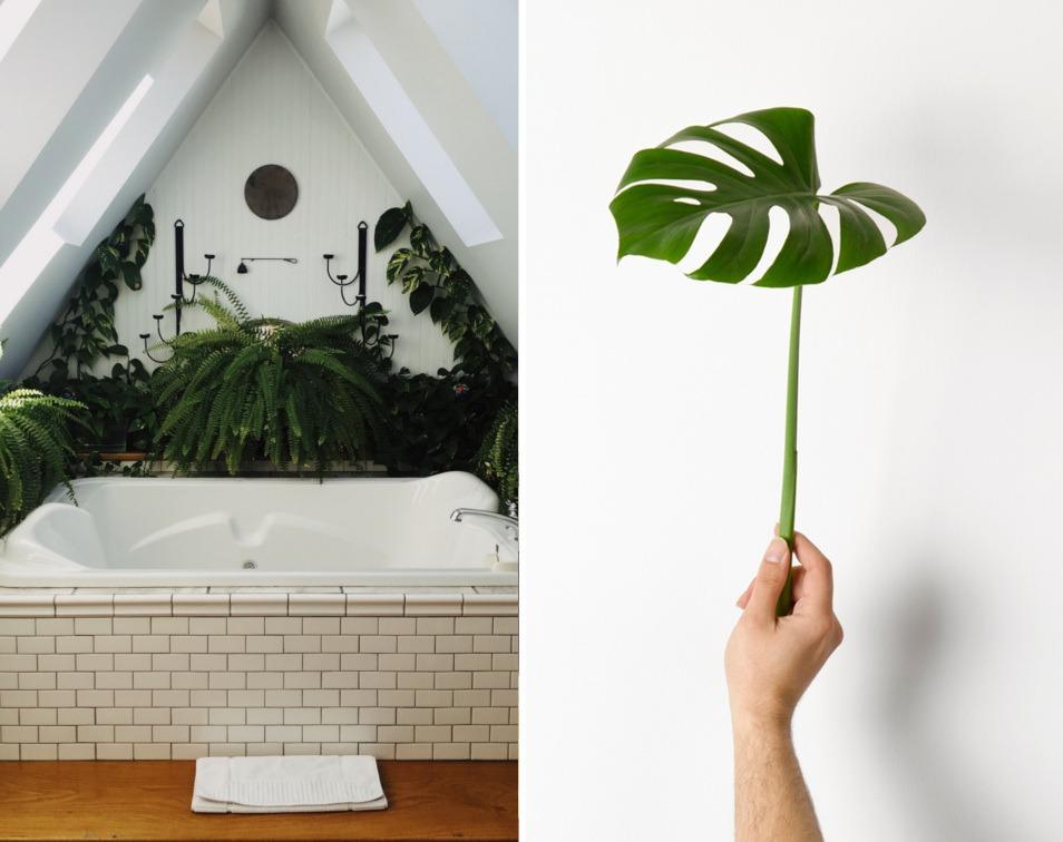 roślinne-dekoracje-wnętrz-porady-wnętrzarskie