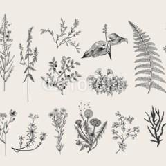 szare-zioła-kwiaty-vintage