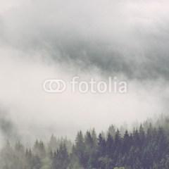 mglisty-las-wzgórze-o-poranku