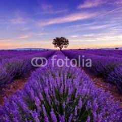 tapeta-z-polem-lawendy-kolor-roku-ultra-violet