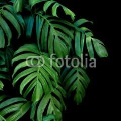 tapeta-egzotyczna-liście-butelkowa-zieleń
