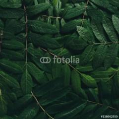 duże-tropikalne-liście-fototapeta