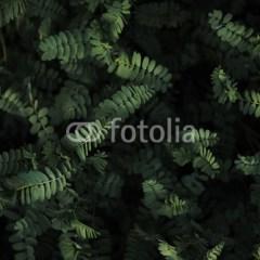 dzika-roślinność-w-dżungli-fototapeta