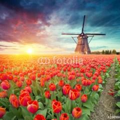 krajobraz-holandii