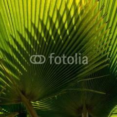 dekoracje-motyw-roślinny-palma-plakat-na-ścianę
