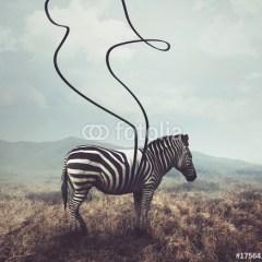 Zebra na plaży