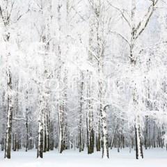 mroźna-zima-w-zagajniku-obraz