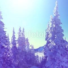 zima-w-lesie-w-pełnym-słońcu-plakat