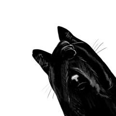 czarny-kot-plakaty-w-ramie