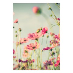 rozowe-kwiaty-plakat