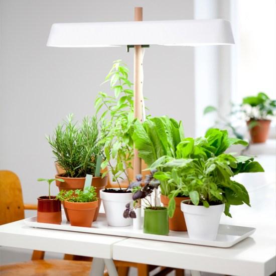 Green Light cultivateur fines herbes Linda Bergroth