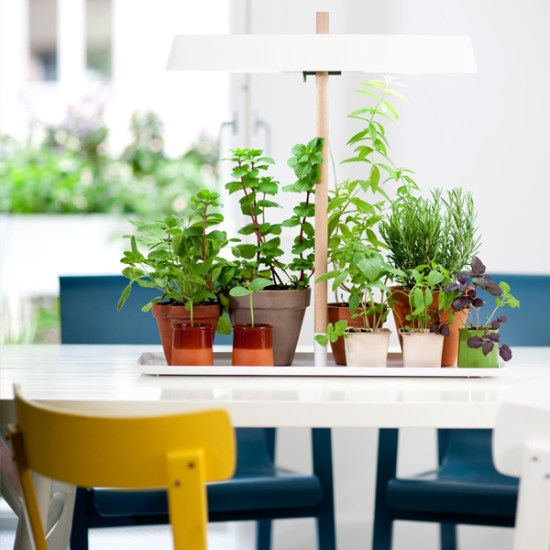 cultivateur fines herbes Linda Bergroth