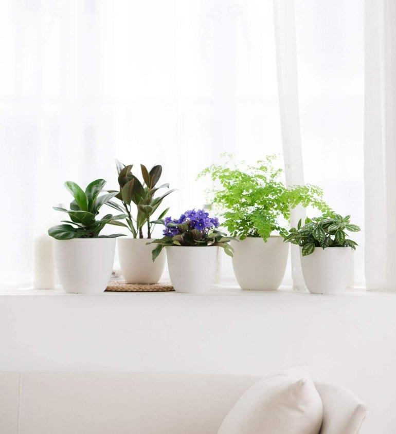 Plantez un jardin