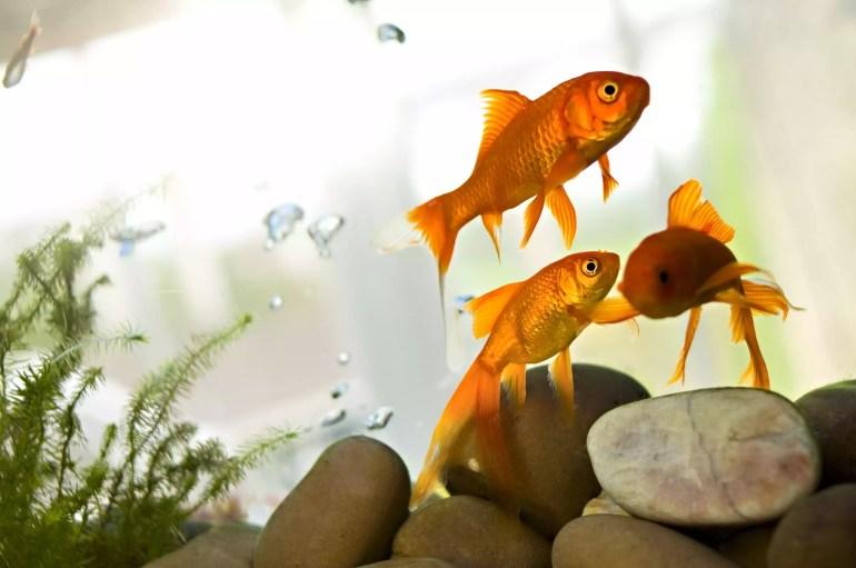 Les meilleurs emplacements pour les aquariums Feng Shui