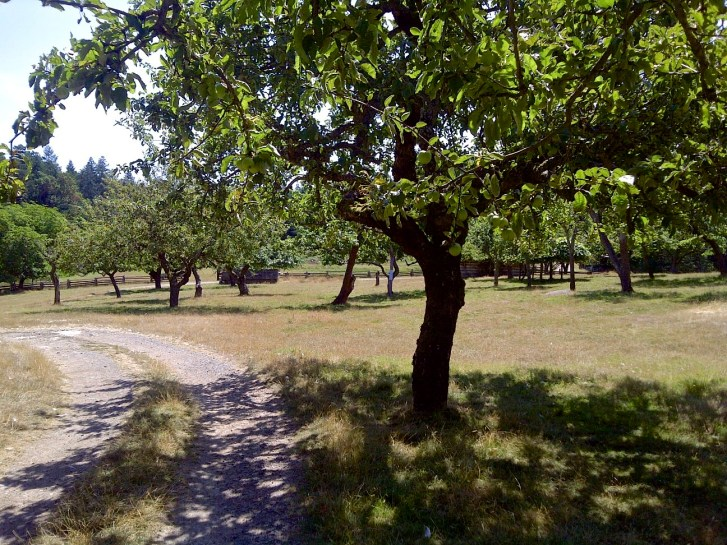 DeCourcy Island Farm
