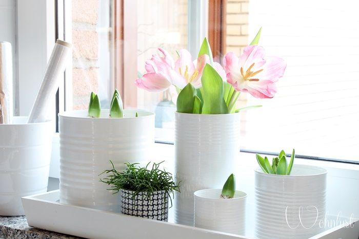 Plantes-et-fleurs-d'intérieur