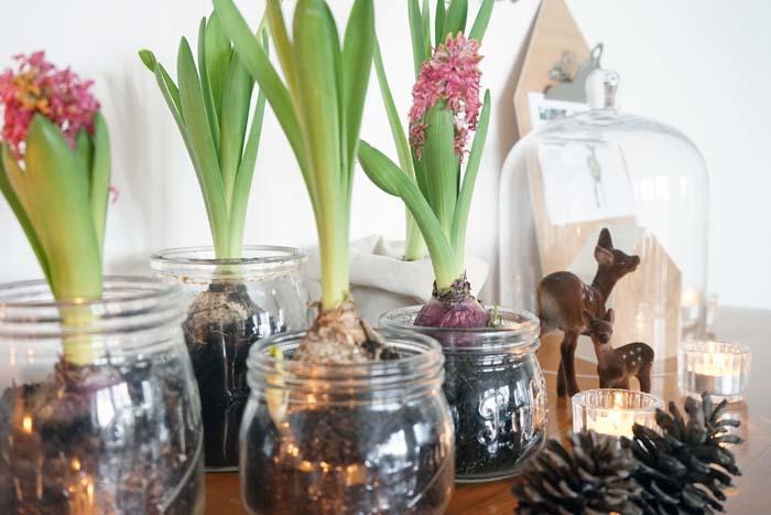 Bocaux à jacinthe – Ma déco de Noël végétale
