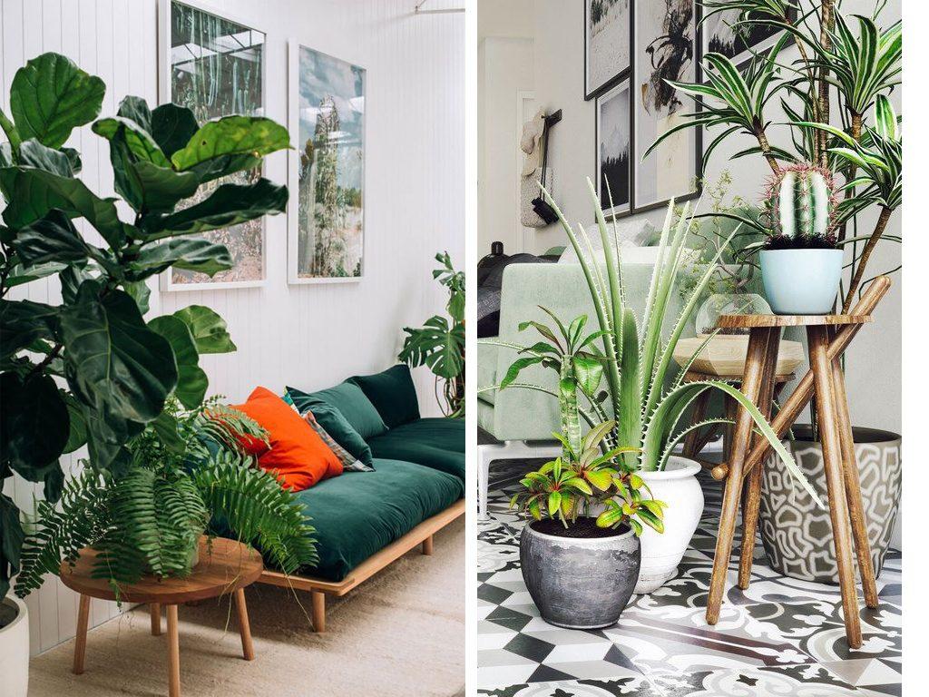 zoom sur les plantes d interieur faciles d entretien et tres deco