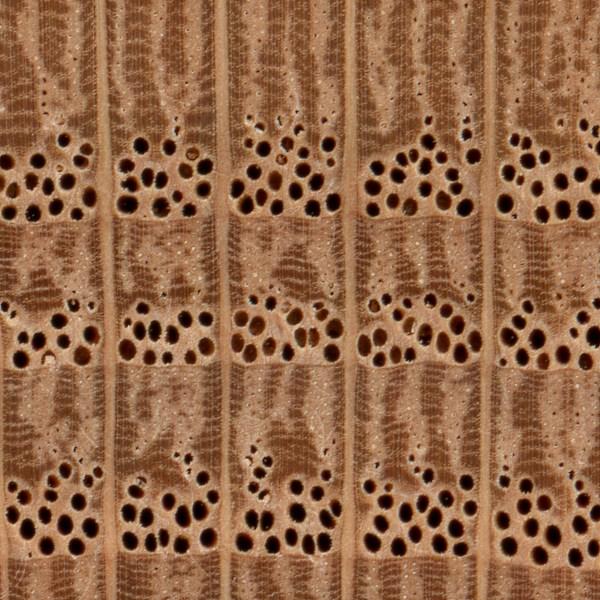 red-oak-endgrain-zoom