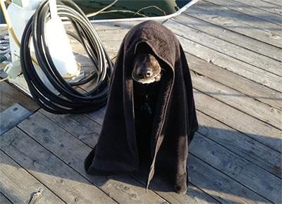 perro-lado-oscuro