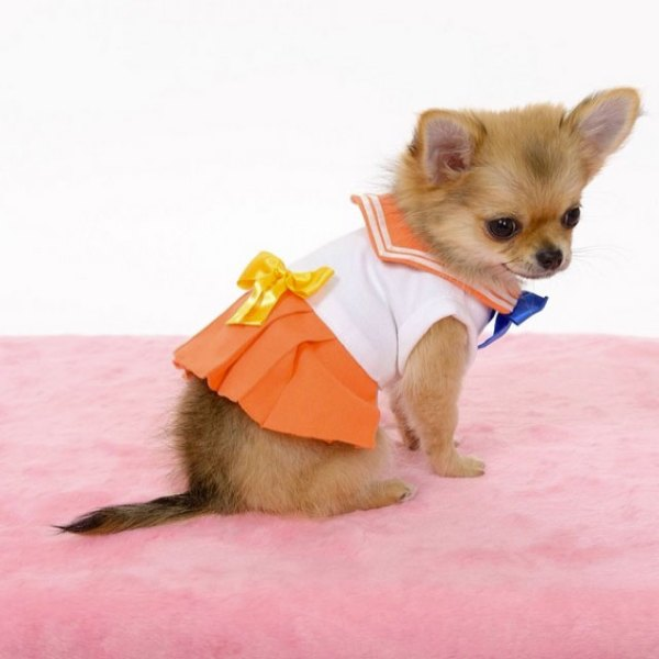 Sailor-moon-dog-cosplay-06