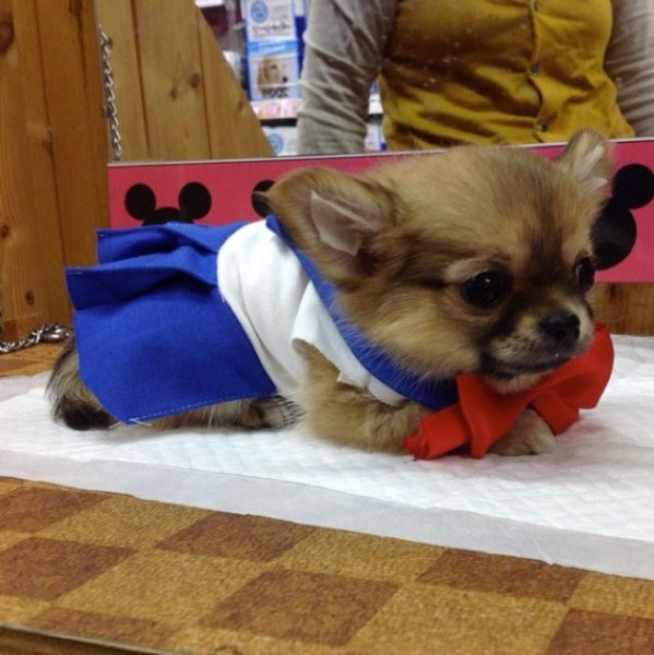 Sailor-moon-dog-cosplay-14