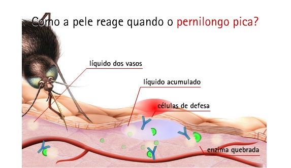 Ilustração pernilongo