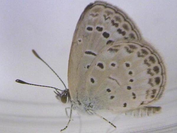 exemplar saudável da borboleta para comparação